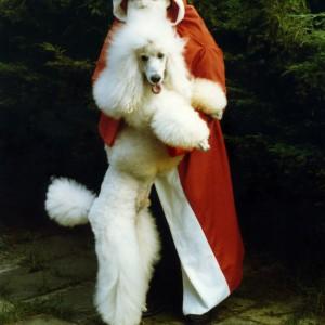 pudel_frohe weihnachten_nikolaus